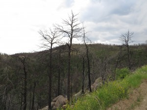 Hillsides denuded of forest by wildfires become more vulnerable to stormwater runoff, exacerbating downstream flooding.