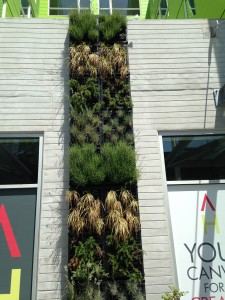Vertical garden in Seattle